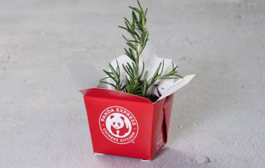 Plant a Garden in Takeout containers